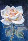 Роза моя... ты чайная